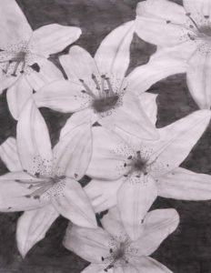 Flower Pencil Drawing by Valerie P