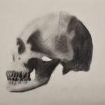 Lael R. Gr. 6 - Human Skull